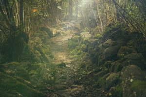 forest-438432_1920